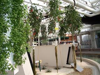 aero-epcot-plants