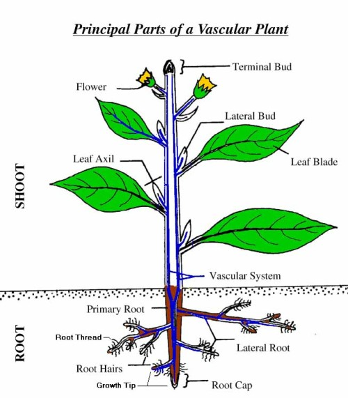 aeroponic plant root structure